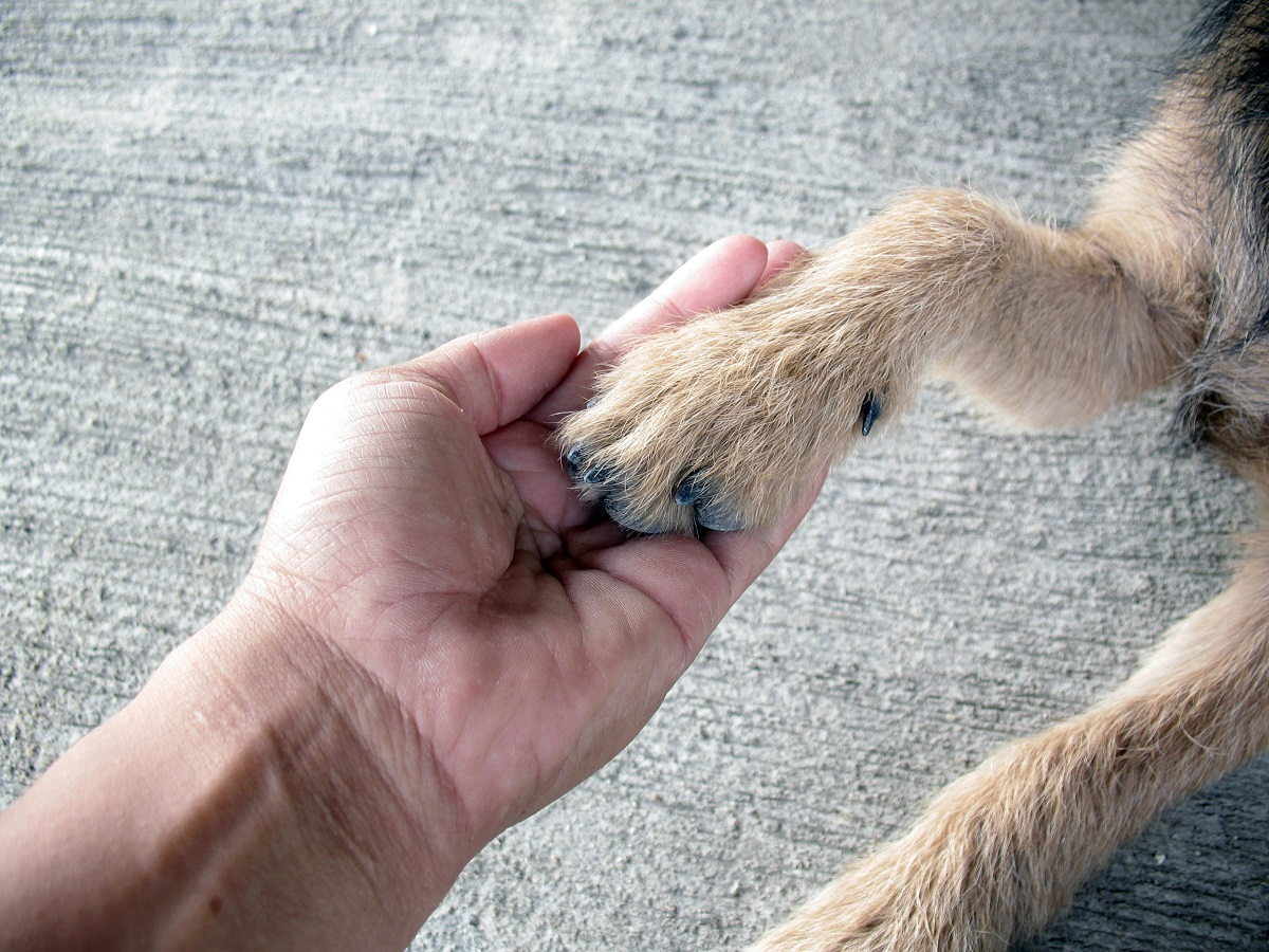 Man holding dog's Paw